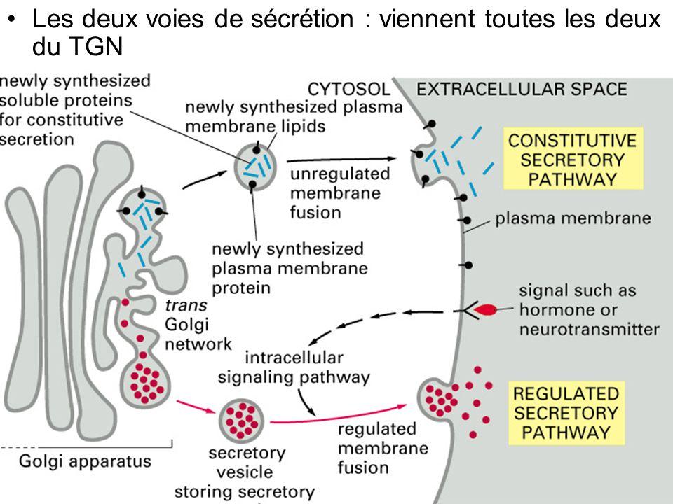 10 Les deux choix Il y a un signal –Lysosome –Sécrétion Il n y a pas de signal –Surface = voie par défaut Comme si les molécules étaient dirigées automatiquement du Golgi vers la surface
