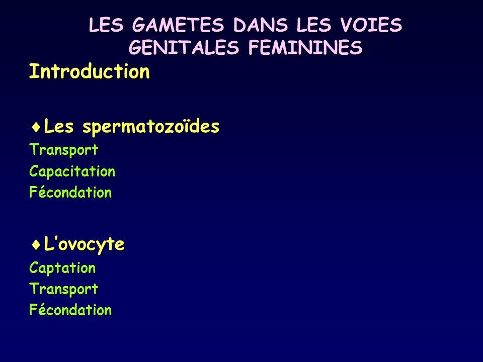 LES GAMETES DANS LES VOIES GENITALES FEMININES Introduction Les spermatozoïdes Les spermatozoïdesTransportCapacitationFécondation Lovocyte LovocyteCap
