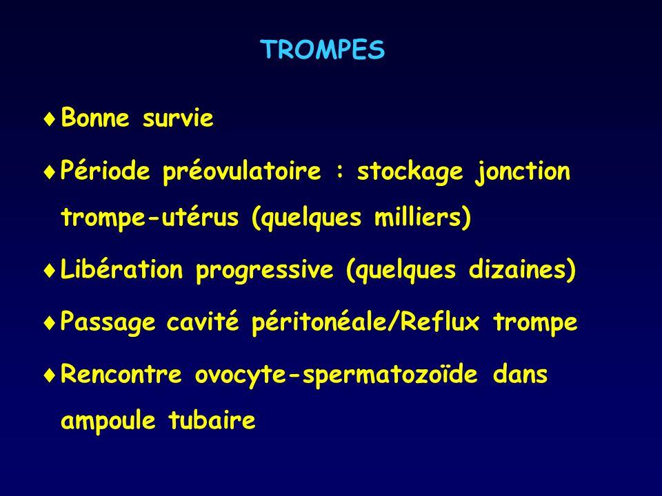 TROMPES Bonne survie Période préovulatoire : stockage jonction trompe-utérus (quelques milliers) Libération progressive (quelques dizaines) Passage ca