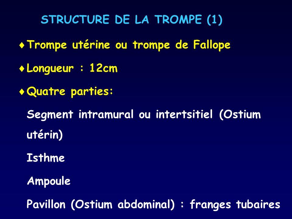 STRUCTURE DE LA TROMPE (1) Trompe utérine ou trompe de Fallope Longueur : 12cm Quatre parties: Segment intramural ou intertsitiel (Ostium utérin) Isth