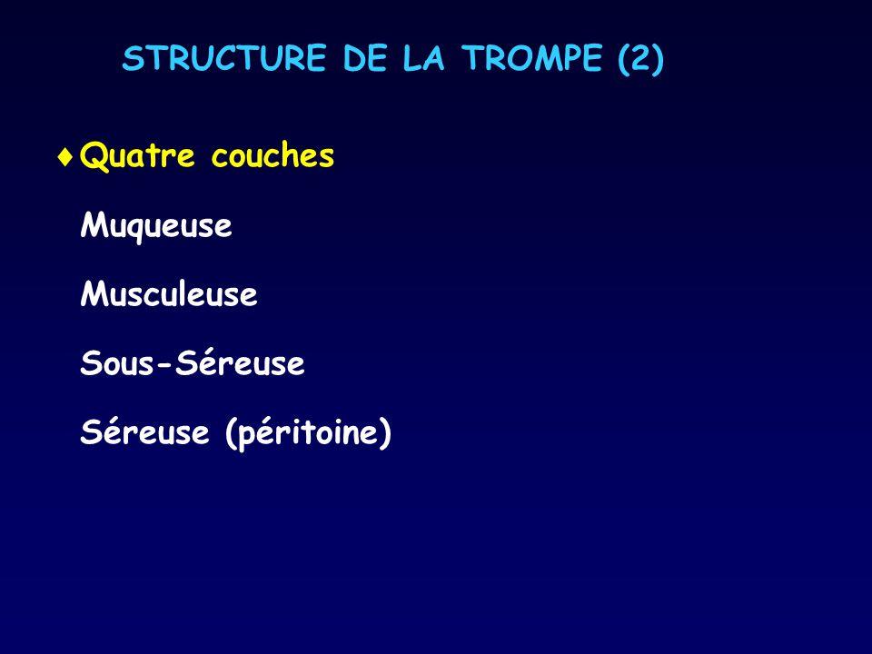 STRUCTURE DE LA TROMPE (2) Quatre couches Muqueuse Musculeuse Sous-Séreuse Séreuse (péritoine)