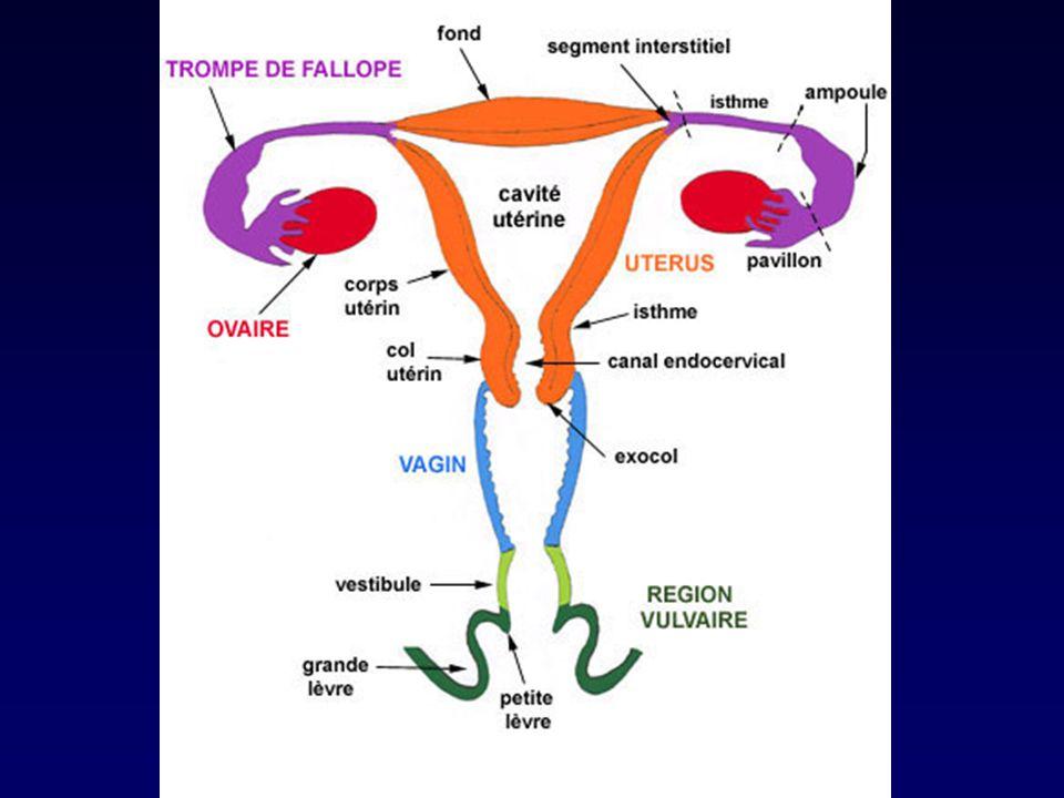 EJACULAT NORMAL SPERMATOZOÏDES SPERMATOZOÏDES PLASMA SEMINAL PLASMA SEMINAL Volume : 2 à 6 ml pH : 7,2 à 7,8 Abstinence