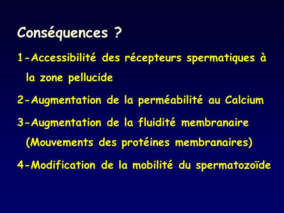 Conséquences ? 1-Accessibilité des récepteurs spermatiques à la zone pellucide 2-Augmentation de la perméabilité au Calcium 3-Augmentation de la fluid