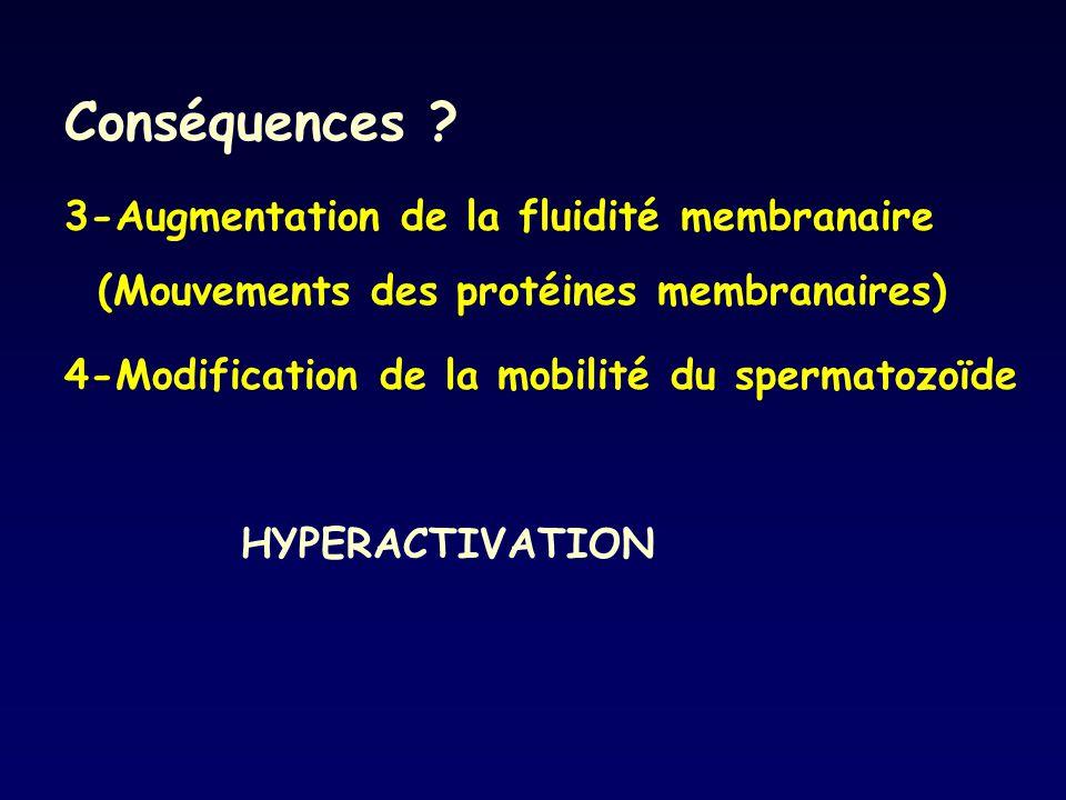Conséquences ? 3-Augmentation de la fluidité membranaire (Mouvements des protéines membranaires) 4-Modification de la mobilité du spermatozoïde HYPERA