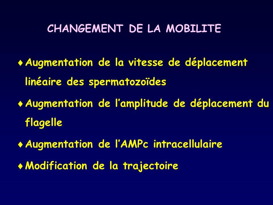CHANGEMENT DE LA MOBILITE Augmentation de la vitesse de déplacement linéaire des spermatozoïdes Augmentation de lamplitude de déplacement du flagelle