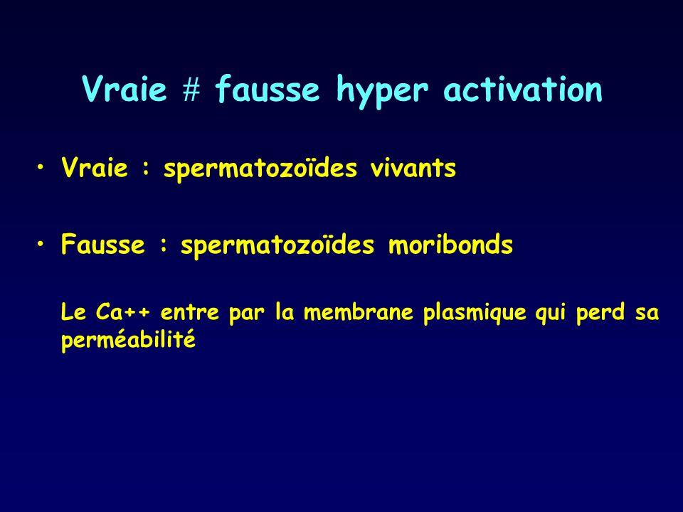 Vraie fausse hyper activation Vraie : spermatozoïdes vivants Fausse : spermatozoïdes moribonds Le Ca++ entre par la membrane plasmique qui perd sa per