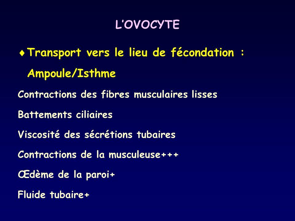 LOVOCYTE Transport vers le lieu de fécondation : Ampoule/Isthme Contractions des fibres musculaires lisses Battements ciliaires Viscosité des sécrétio