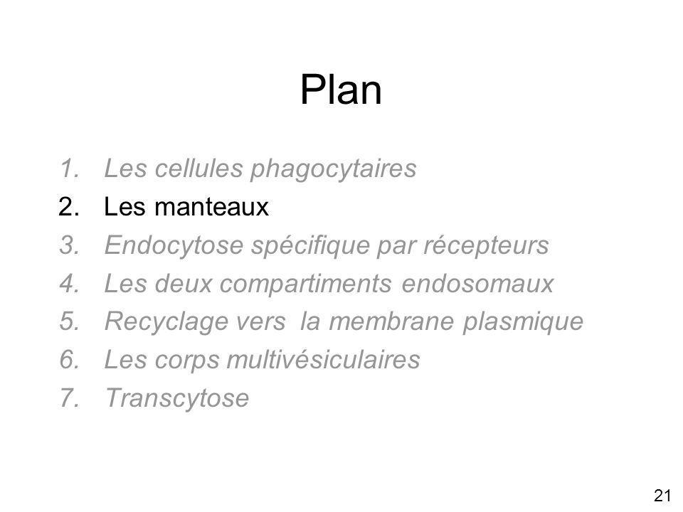 21 Plan 1.Les cellules phagocytaires 2.Les manteaux 3.Endocytose spécifique par récepteurs 4.Les deux compartiments endosomaux 5.Recyclage vers la membrane plasmique 6.Les corps multivésiculaires 7.Transcytose