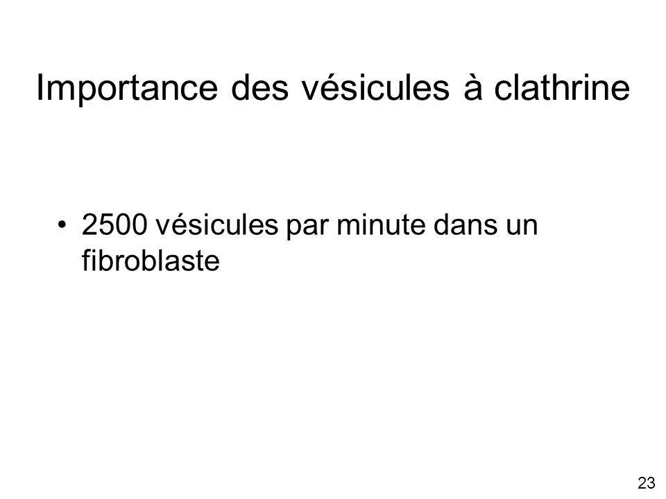 23 Importance des vésicules à clathrine 2500 vésicules par minute dans un fibroblaste