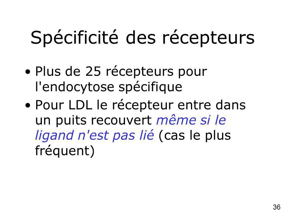 36 Spécificité des récepteurs Plus de 25 récepteurs pour l endocytose spécifique Pour LDL le récepteur entre dans un puits recouvert même si le ligand n est pas lié (cas le plus fréquent)