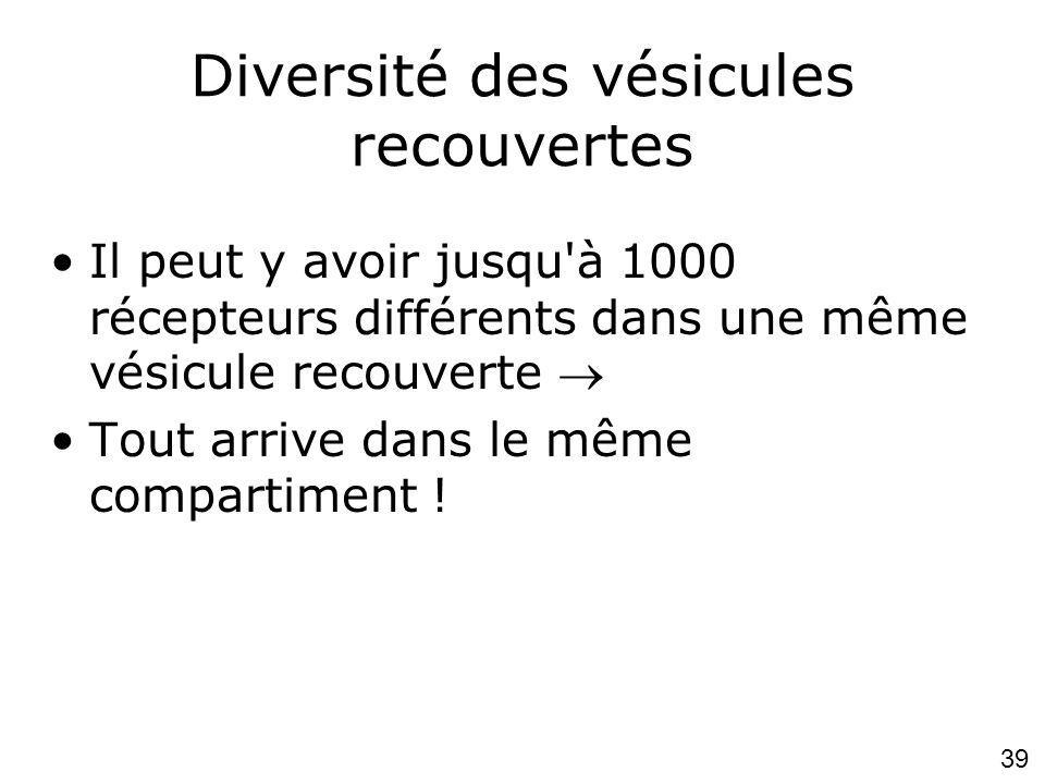 39 Diversité des vésicules recouvertes Il peut y avoir jusqu à 1000 récepteurs différents dans une même vésicule recouverte Tout arrive dans le même compartiment !