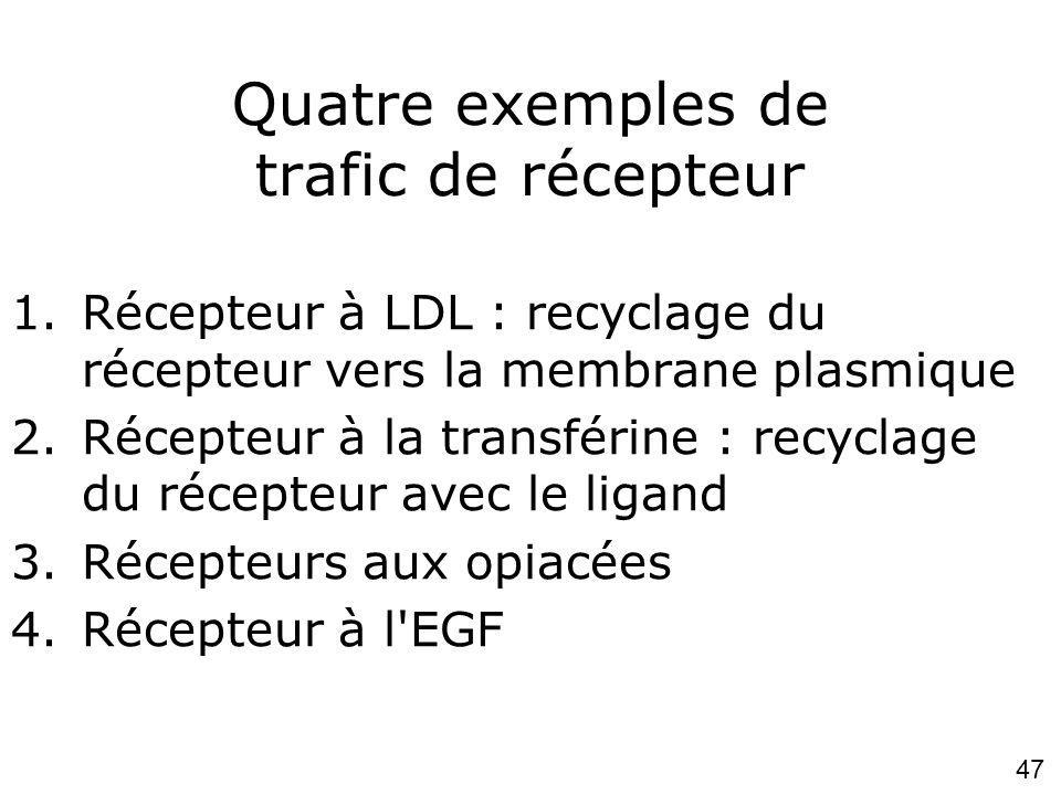 47 Quatre exemples de trafic de récepteur 1.Récepteur à LDL : recyclage du récepteur vers la membrane plasmique 2.Récepteur à la transférine : recyclage du récepteur avec le ligand 3.Récepteurs aux opiacées 4.Récepteur à l EGF