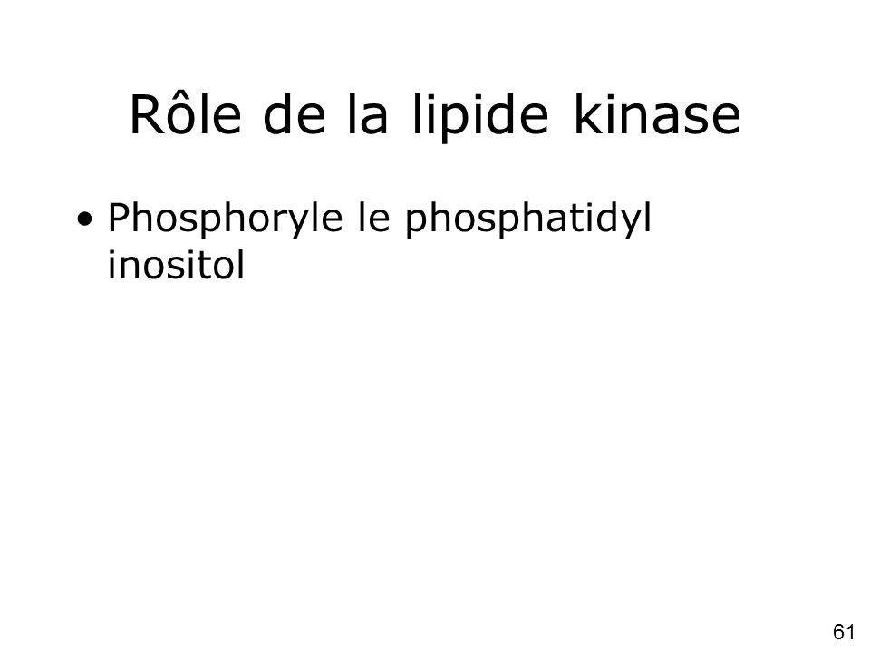 61 Rôle de la lipide kinase Phosphoryle le phosphatidyl inositol