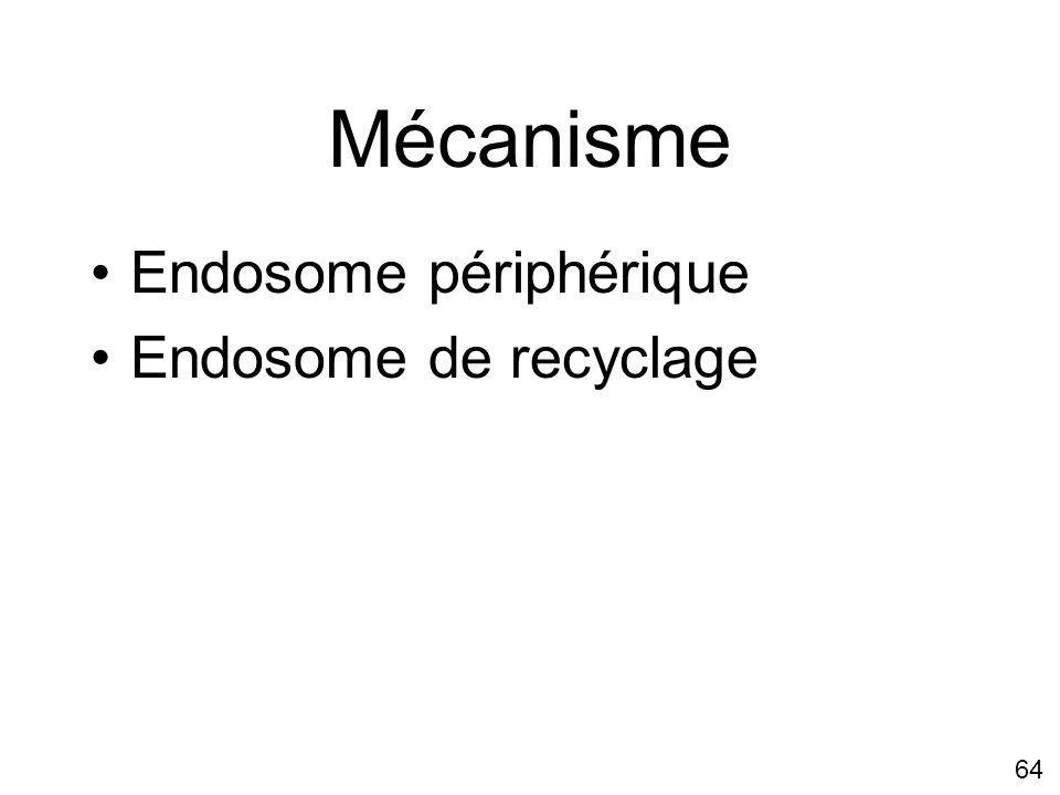 64 Mécanisme Endosome périphérique Endosome de recyclage