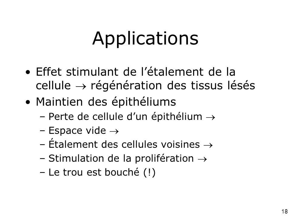 18 Applications Effet stimulant de létalement de la cellule régénération des tissus lésés Maintien des épithéliums –Perte de cellule dun épithélium –E