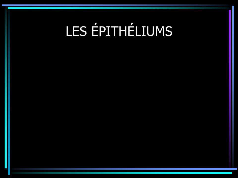 2 Introduction Cellule épithéliale Tissu épithélial Définition Épithéliums de revêtement Épithéliums glandulaires