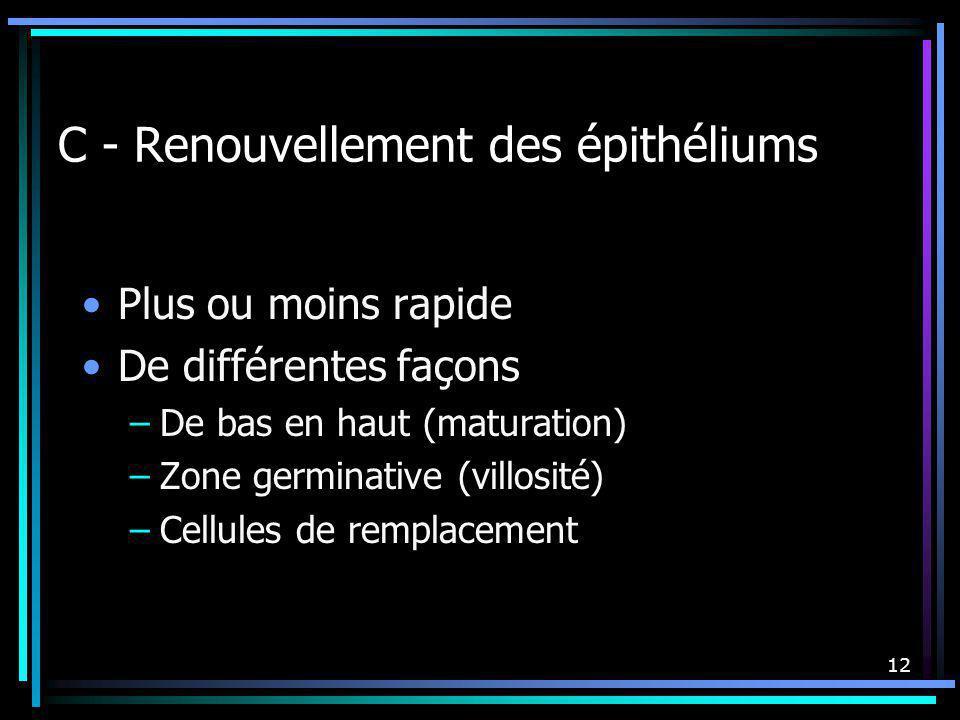 12 C - Renouvellement des épithéliums Plus ou moins rapide De différentes façons –De bas en haut (maturation) –Zone germinative (villosité) –Cellules