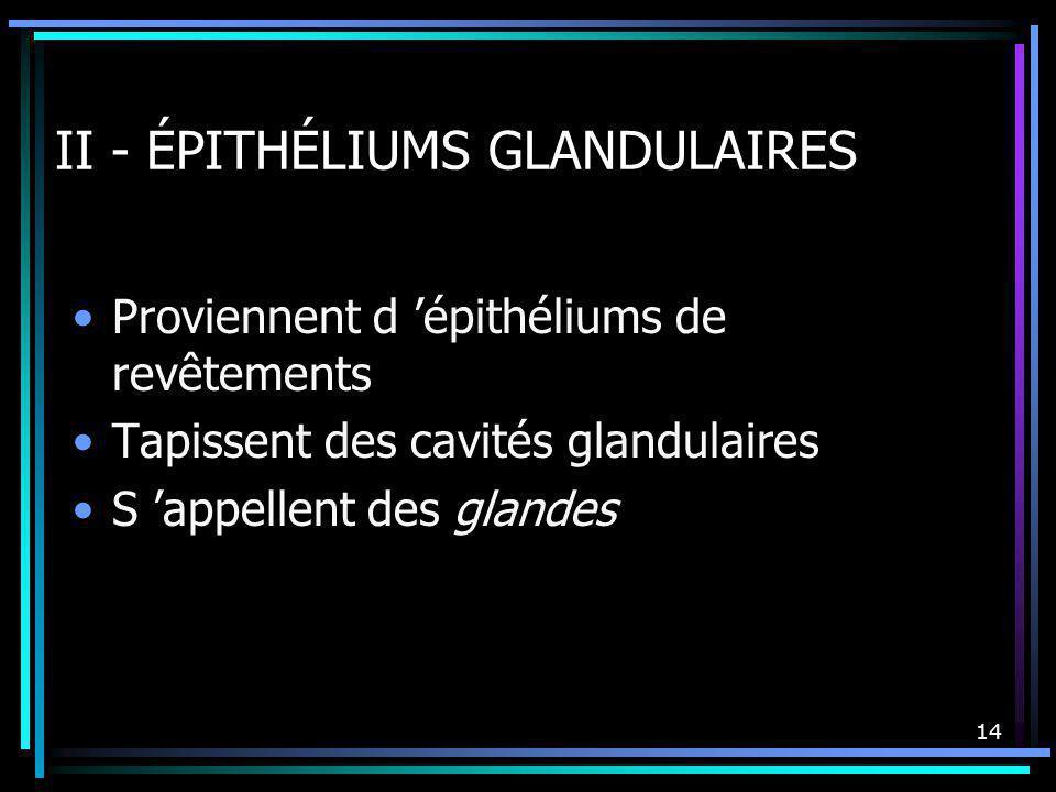 14 II - ÉPITHÉLIUMS GLANDULAIRES Proviennent d épithéliums de revêtements Tapissent des cavités glandulaires S appellent des glandes