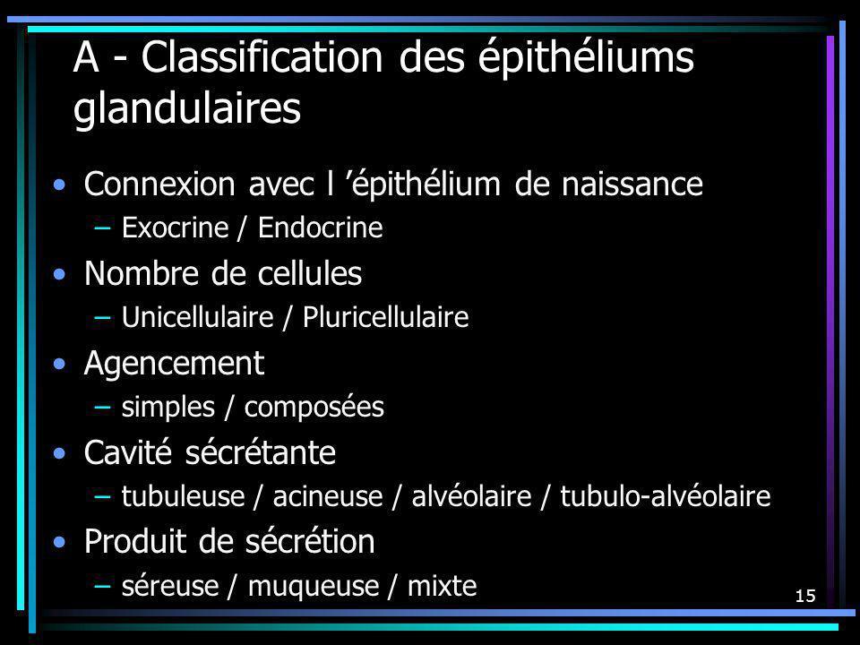 15 A - Classification des épithéliums glandulaires Connexion avec l épithélium de naissance –Exocrine / Endocrine Nombre de cellules –Unicellulaire /