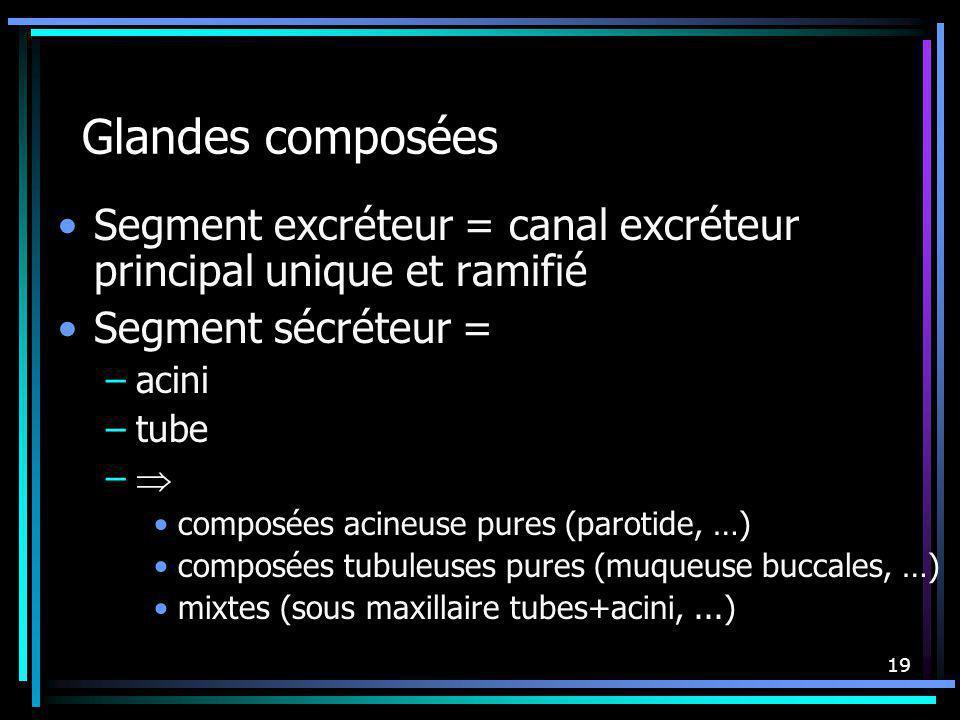 19 Glandes composées Segment excréteur = canal excréteur principal unique et ramifié Segment sécréteur = –acini –tube – composées acineuse pures (paro