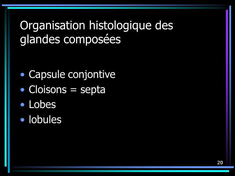 20 Organisation histologique des glandes composées Capsule conjontive Cloisons = septa Lobes lobules