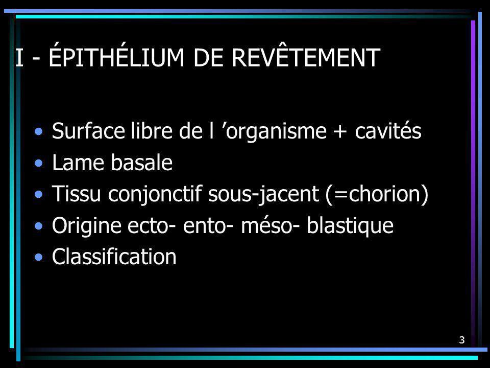 3 I - ÉPITHÉLIUM DE REVÊTEMENT Surface libre de l organisme + cavités Lame basale Tissu conjonctif sous-jacent (=chorion) Origine ecto- ento- méso- bl