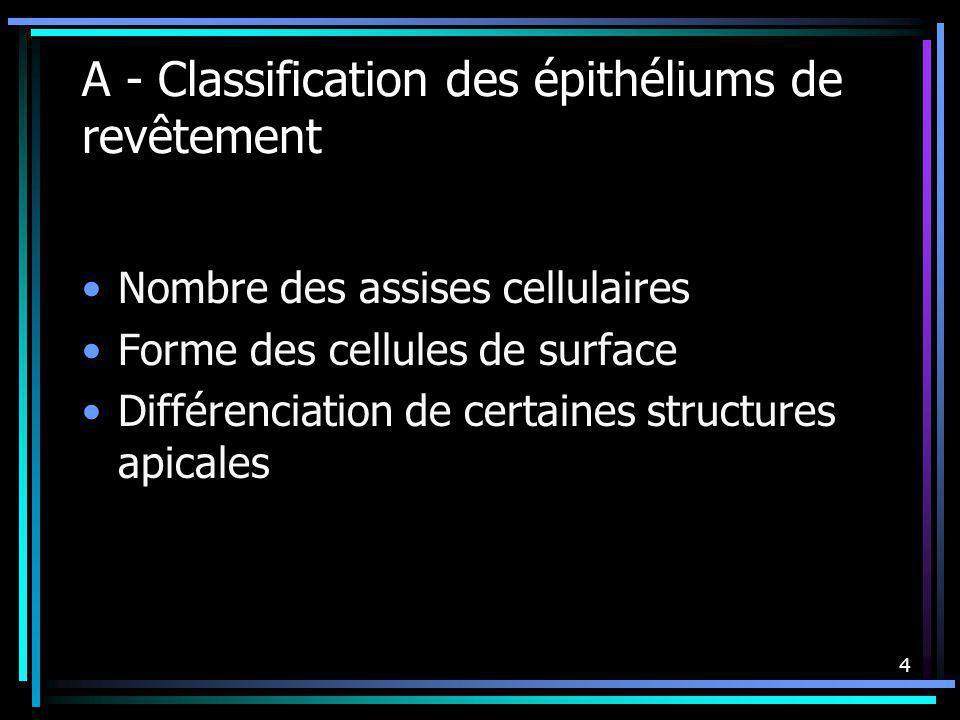 4 A - Classification des épithéliums de revêtement Nombre des assises cellulaires Forme des cellules de surface Différenciation de certaines structure