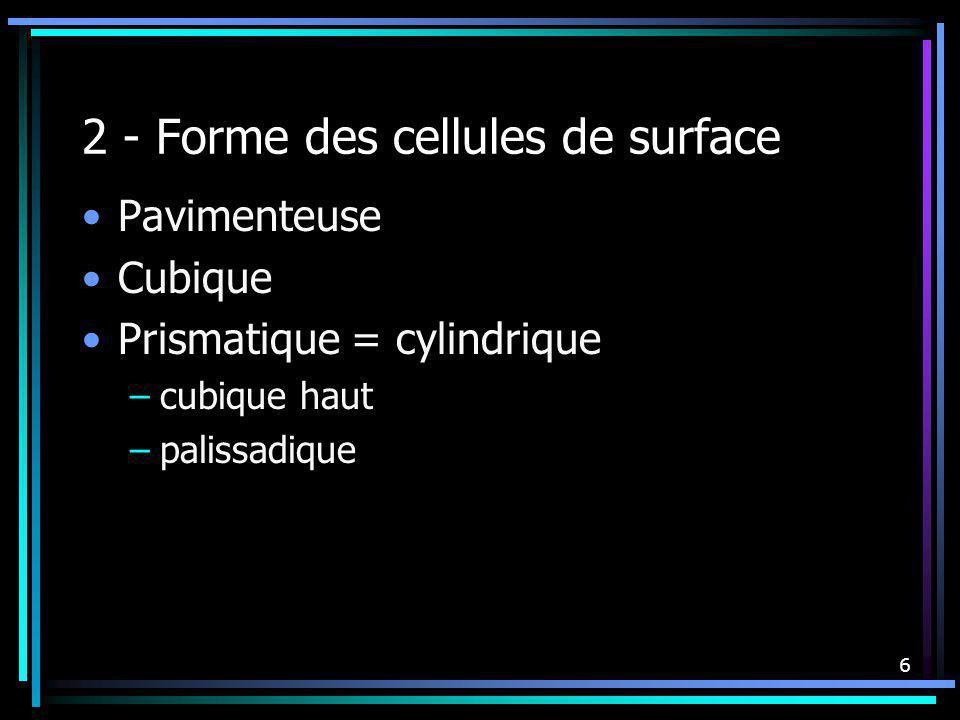 6 2 - Forme des cellules de surface Pavimenteuse Cubique Prismatique = cylindrique –cubique haut –palissadique