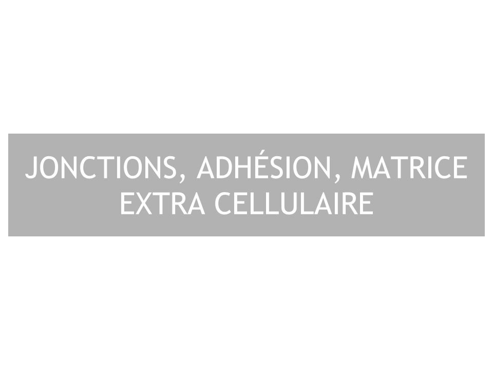 2 Plan I – Jonctions cellulaires II – Adhésion cellulaire III – Matrice extra-cellulaire IV – Intégrines