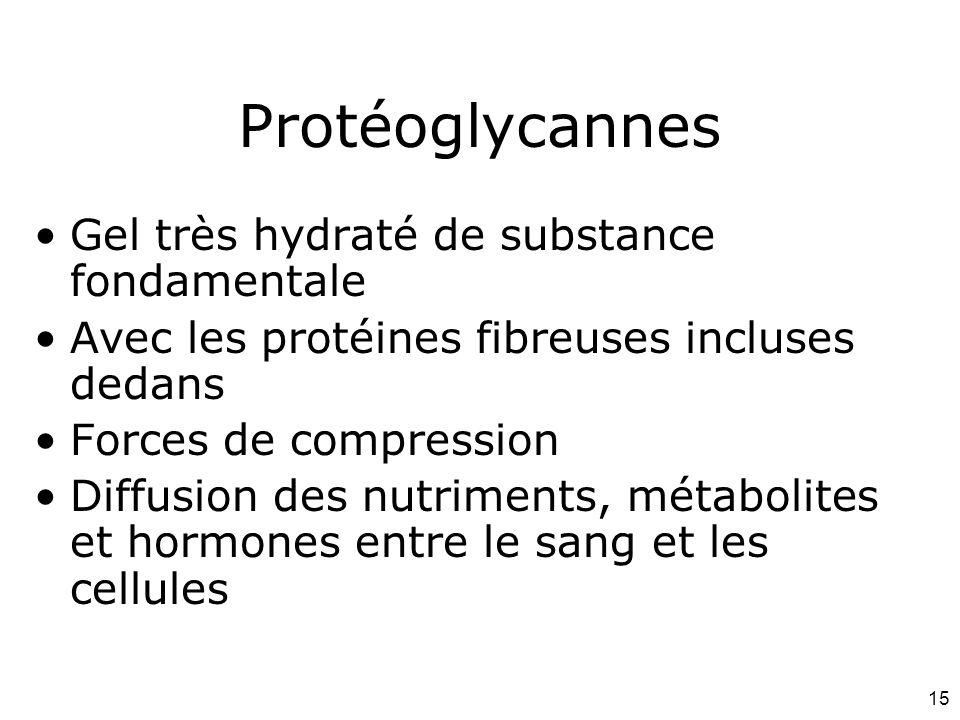 15 Protéoglycannes Gel très hydraté de substance fondamentale Avec les protéines fibreuses incluses dedans Forces de compression Diffusion des nutriments, métabolites et hormones entre le sang et les cellules