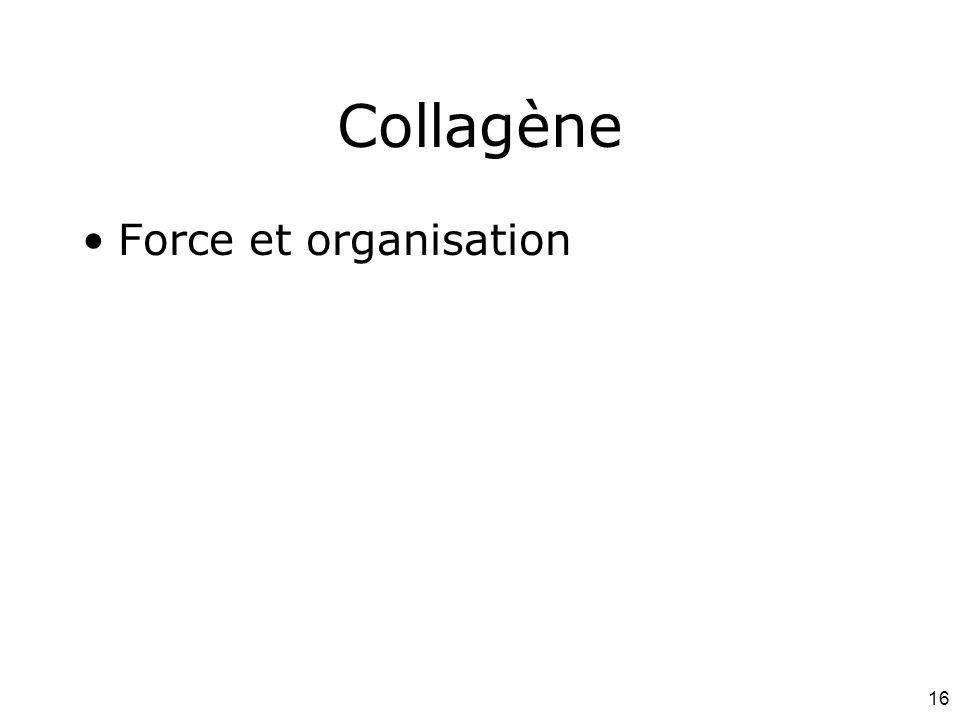 16 Collagène Force et organisation
