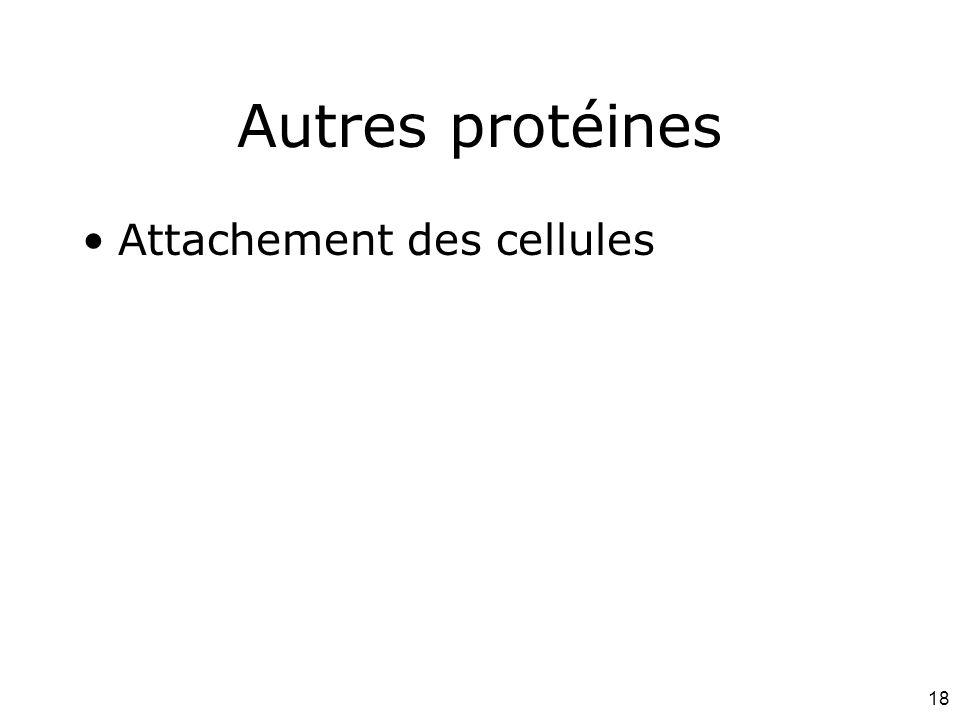 18 Autres protéines Attachement des cellules