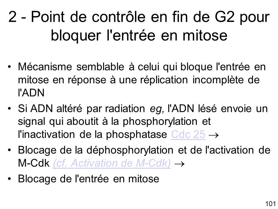 101 2 - Point de contrôle en fin de G2 pour bloquer l'entrée en mitose Mécanisme semblable à celui qui bloque l'entrée en mitose en réponse à une répl