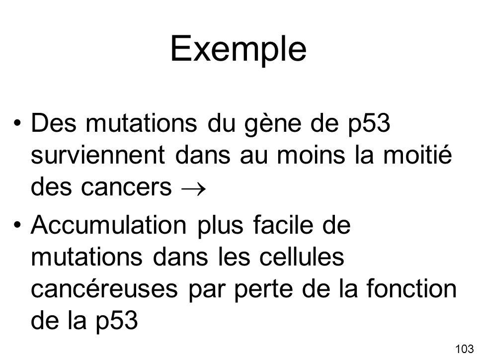 103 Exemple Des mutations du gène de p53 surviennent dans au moins la moitié des cancers Accumulation plus facile de mutations dans les cellules cancé