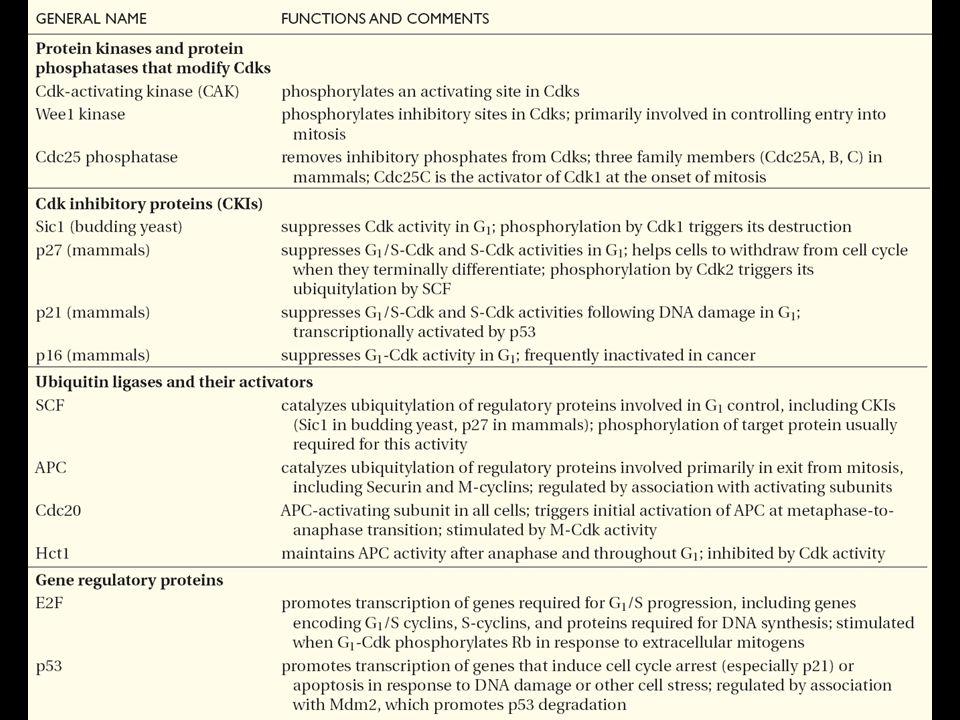 108 Tableau résumant les principales protéines régulatrices du cycle cellulaire Table17-2
