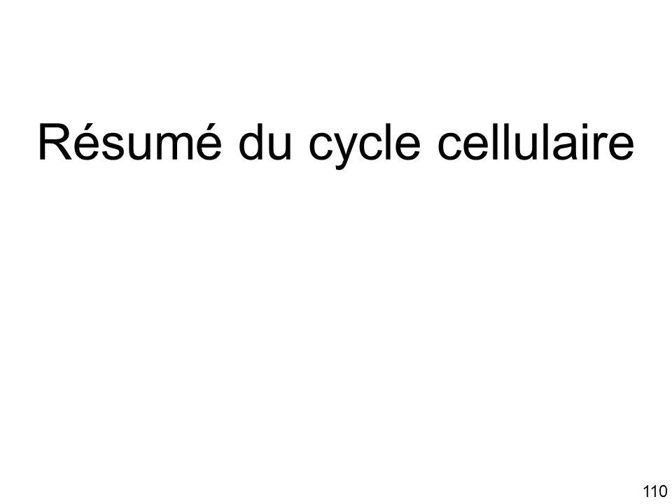 110 Résumé du cycle cellulaire