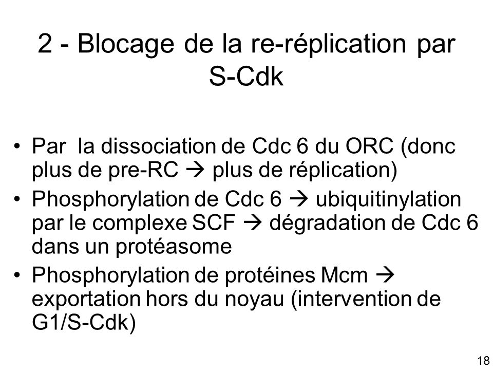 18 2 - Blocage de la re-réplication par S-Cdk Par la dissociation de Cdc 6 du ORC (donc plus de pre-RC plus de réplication) Phosphorylation de Cdc 6 ubiquitinylation par le complexe SCF dégradation de Cdc 6 dans un protéasome Phosphorylation de protéines Mcm exportation hors du noyau (intervention de G1/S-Cdk)