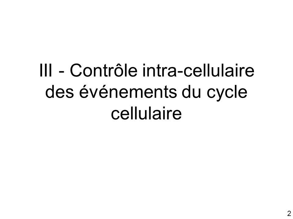 2 III - Contrôle intra-cellulaire des événements du cycle cellulaire