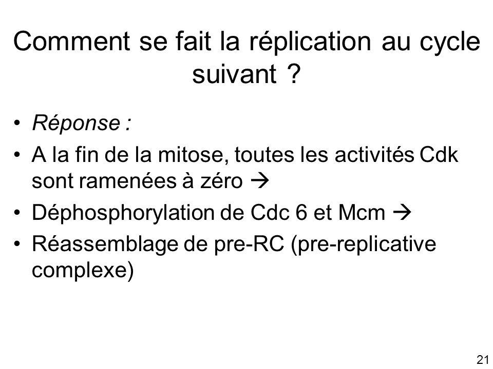 21 Réponse : A la fin de la mitose, toutes les activités Cdk sont ramenées à zéro Déphosphorylation de Cdc 6 et Mcm Réassemblage de pre-RC (pre-replic