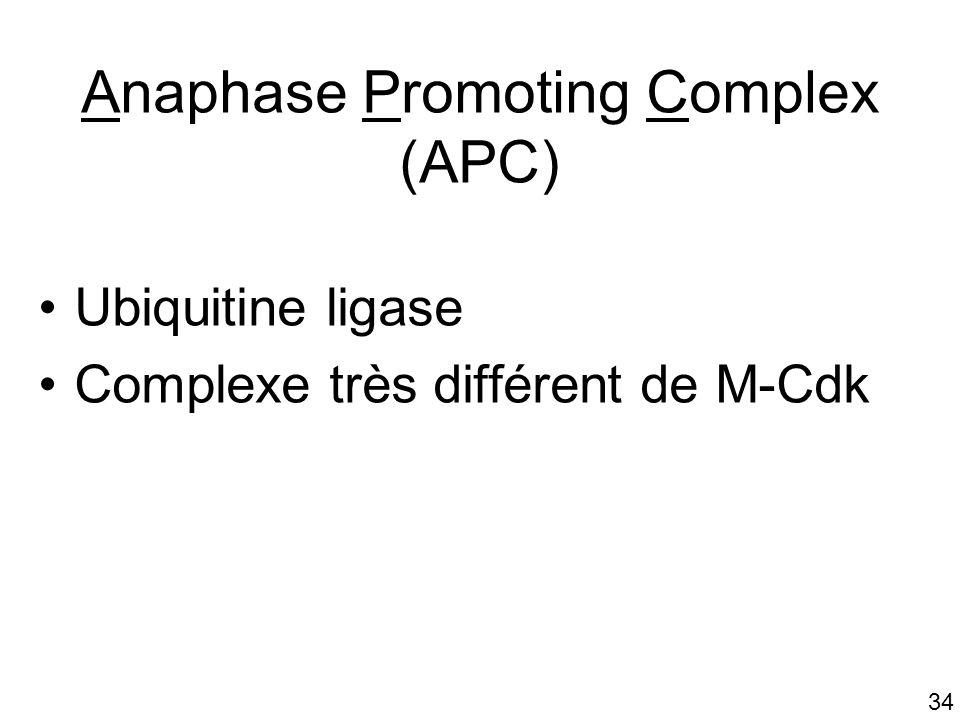 34 Anaphase Promoting Complex (APC) Ubiquitine ligase Complexe très différent de M-Cdk