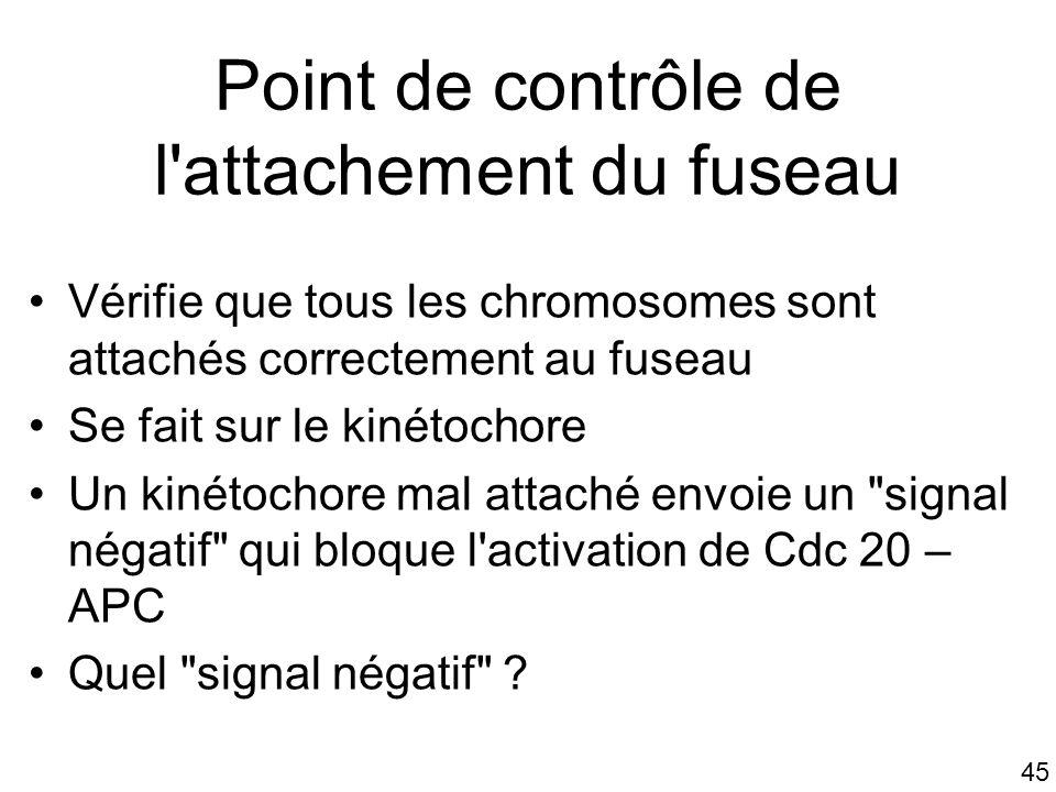 45 Point de contrôle de l'attachement du fuseau Vérifie que tous les chromosomes sont attachés correctement au fuseau Se fait sur le kinétochore Un ki