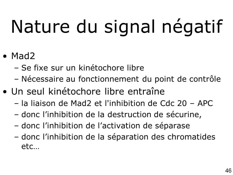 46 Nature du signal négatif Mad2 –Se fixe sur un kinétochore libre –Nécessaire au fonctionnement du point de contrôle Un seul kinétochore libre entraî