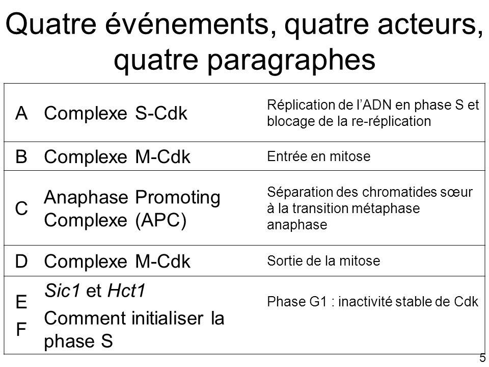 5 Quatre événements, quatre acteurs, quatre paragraphes AComplexe S-Cdk Réplication de lADN en phase S et blocage de la re-réplication BComplexe M-Cdk
