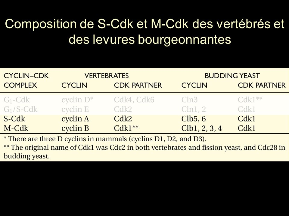 107 Tableau résumant les principales protéines régulatrices du cycle cellulaire