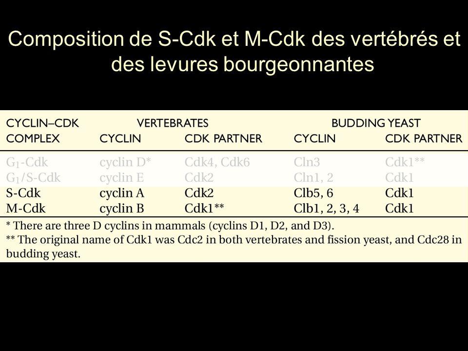 97 Moll,UM2003 p1001(fig1) Molecular Cancer Research Vol.