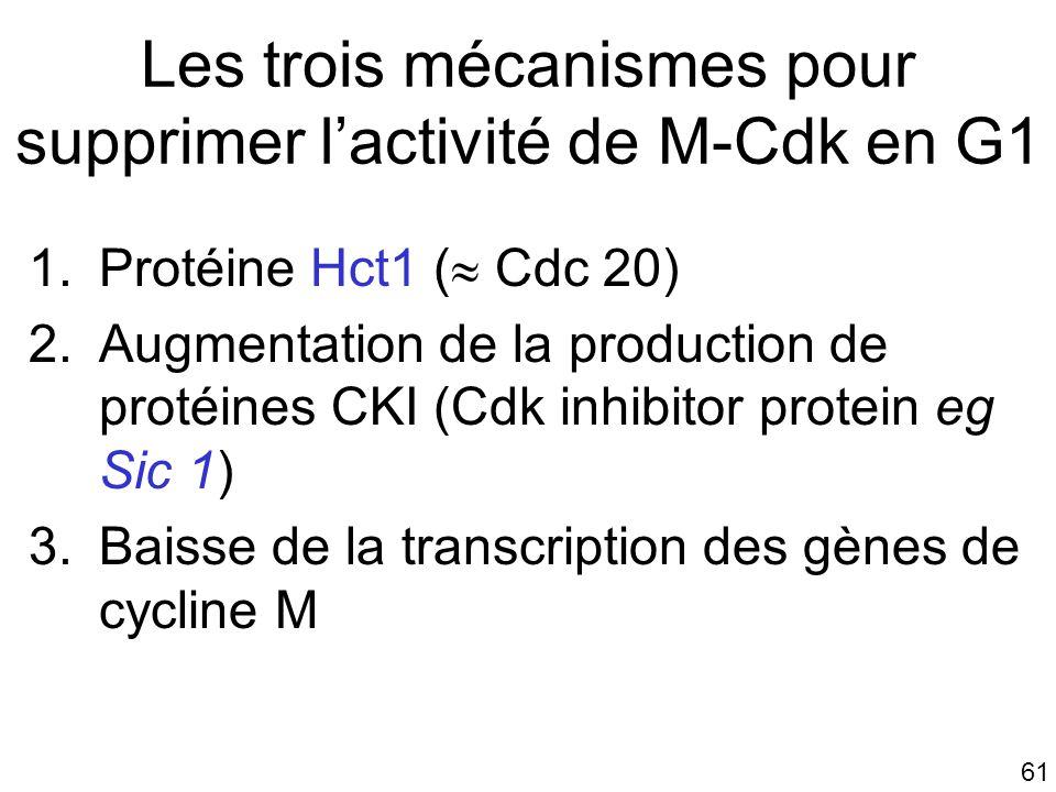 61 Les trois mécanismes pour supprimer lactivité de M-Cdk en G1 1.Protéine Hct1 ( Cdc 20) 2.Augmentation de la production de protéines CKI (Cdk inhibi