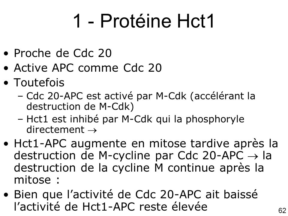 62 1 - Protéine Hct1 Proche de Cdc 20 Active APC comme Cdc 20 Toutefois –Cdc 20-APC est activé par M-Cdk (accélérant la destruction de M-Cdk) –Hct1 es