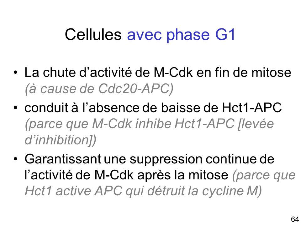 64 Cellules avec phase G1 La chute dactivité de M-Cdk en fin de mitose (à cause de Cdc20-APC) conduit à labsence de baisse de Hct1-APC (parce que M-Cd