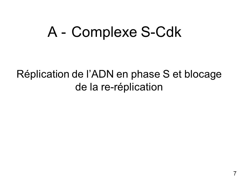 18 2 - Blocage de la re-réplication par S-Cdk Par la dissociation de Cdc 6 du ORC (donc plus de pre-RC plus de réplication) Phosphorylation de Cdc 6 ubiquitinylation par le complexe SCF dégradation de Cdc 6 dans un protéasome Phosphorylation de protéines Mcm exportation hors du noyau (intervention de G1/S-Cdk)