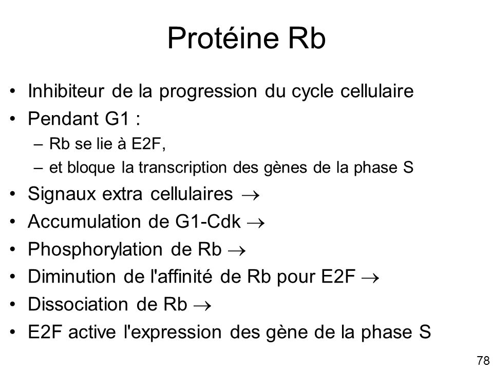 78 Protéine Rb Inhibiteur de la progression du cycle cellulaire Pendant G1 : –Rb se lie à E2F, –et bloque la transcription des gènes de la phase S Signaux extra cellulaires Accumulation de G1-Cdk Phosphorylation de Rb Diminution de l affinité de Rb pour E2F Dissociation de Rb E2F active l expression des gène de la phase S